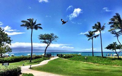 Maui – die Insel der Weiblichkeit