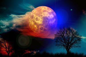 Kraftvoll durch die Rauhnächte ins Venusjahr - Baum