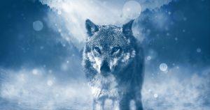Kraftvoll durch die Rauhnächte ins Venusjahr - Wolf